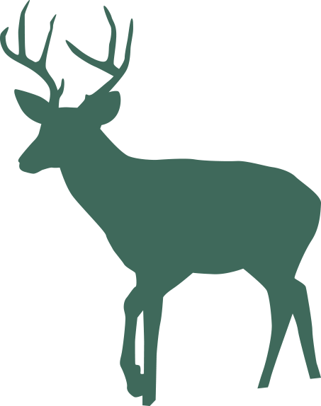 illustration - deer