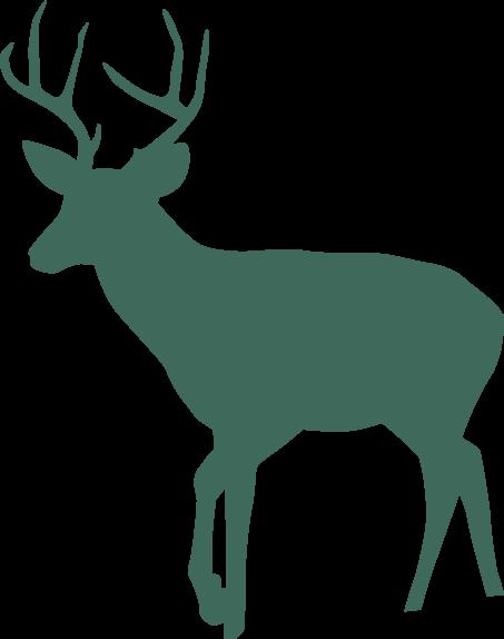 illustration - deer